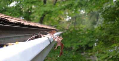 Clermont Gutter Repair